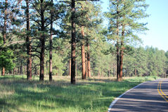 Straße in den Wald Lizenzfreie Stockbilder