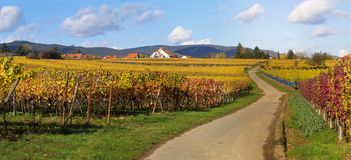 Straße in den wineyards Lizenzfreies Stockfoto