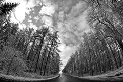 Straße in den Winter lizenzfreie stockfotografie