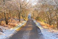 Straße der einzelnen Spur im Winter. Stockfotografie