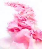 Straße der rosafarbenen Blumenblätter Lizenzfreie Stockfotografie