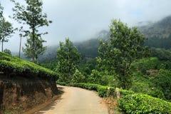 Straße in der Teeplantage Lizenzfreies Stockbild