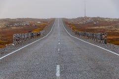 Straße in der Tundra Stockbilder