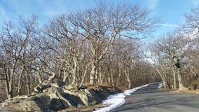 Straße in der woods Stockfotos