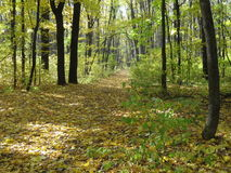 Straße in der woods Lizenzfreie Stockbilder