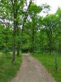 Straße in der woods Stockfoto