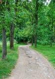 Straße in der woods Lizenzfreie Stockfotografie