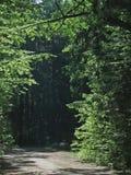 Straße, die in dunklen Wald führt Stockbilder