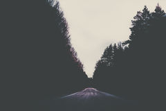 Straße, die durch einen dunklen Wald führt lizenzfreie stockfotos