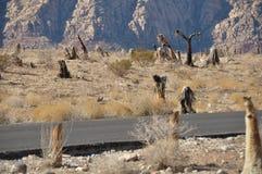 Straße, die Wüste durchläuft Stockfotos