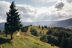 Straße, die zu die Spitze des Berges führt Stockfotos