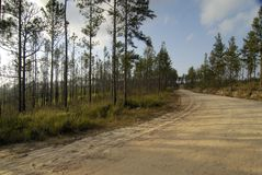 Straße durch Belize lizenzfreies stockfoto