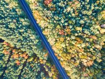 Straße durch bunten Herbstwald lizenzfreies stockfoto