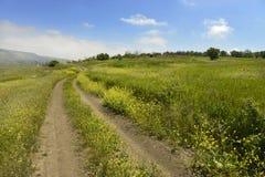 Straße durch das blühende Feld lizenzfreies stockfoto