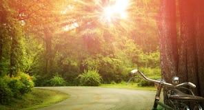 Straße durch das Holz und das Fahrrad Stockfotografie