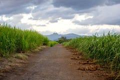 Straße durch das Zuckerrohrfeld Stockfotos
