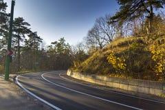Straße durch den Herbstwald Stockbilder