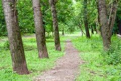 Straße durch den Park Natur, Hintergrund Stockfotos