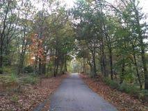 Straße durch den Wald lizenzfreie stockfotografie