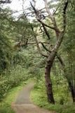 Straße durch den Wald Stockfotografie