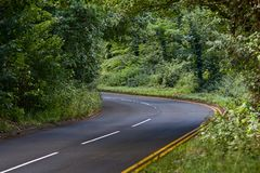 Straße durch den Wald lizenzfreies stockfoto