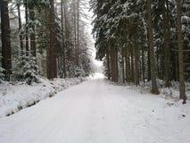 Straße durch den Wald im Winter Stockbilder