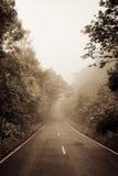 Straße durch den Wald - Straße mit Smog stockfotos