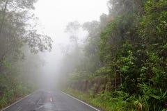 Straße durch den Wald - Straße mit Smog stockbild