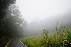 Straße durch den Wald - Straße mit Smog lizenzfreie stockfotos