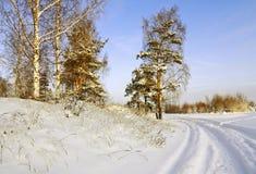 Straße durch den Winterwald Stockbild