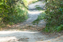 Straße durch die Bäume im Wald Lizenzfreies Stockfoto