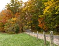 Straße durch die Fall-Bäume stockbild