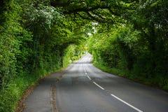 Straße durch die grüne Landschaft Stockbild