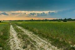 Straße durch ein Feld von grünen Getreide und von dunklen Wolken bei Sonnenuntergang Stockfotografie