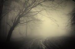 Straße durch einen dunklen Wald Stockfoto