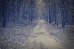 Straße durch einen dunkler Waldnebelhaften morgen Wald Stockbild