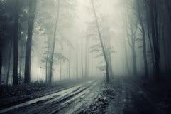 Straße durch einen gespenstischen Wald mit dunklem Nebel Lizenzfreies Stockfoto