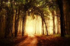 Straße durch einen goldenen Wald am Herbst Stockbilder