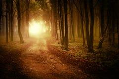 Straße durch einen goldenen Wald am Herbst Stockfotografie