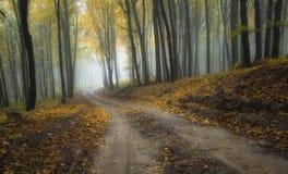 Straße durch einen nebelhaften Wald mit schönen Farben Lizenzfreies Stockfoto