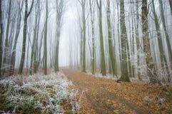 Straße durch einen schönen gefrorenen Wald im Winter Stockfotografie