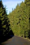 Straße durch einen starken Wald Stockbild