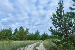 Straße durch einen Wald Lizenzfreies Stockbild