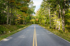 Straße durch einen Wald Stockfotos
