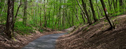 Straße durch Frühlings-Wald lizenzfreies stockfoto