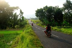Straße durch grüne Reisfelder Lizenzfreies Stockfoto
