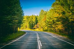 Straße durch grünen tiefen Wald in Russland lizenzfreie stockbilder