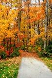 Straße durch Herbst-Bäume Stockfoto