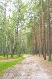 Straße durch Kieferwald Stockfotos