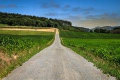 Straße durch Maisbearbeitung stockbilder